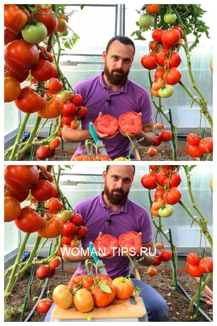 Кефир - защитник помидоров