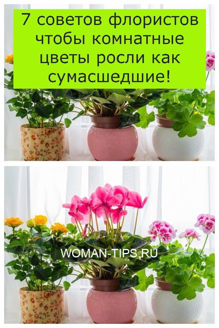 7 советов флористов чтобы комнатные цветы росли как сумасшедшие!