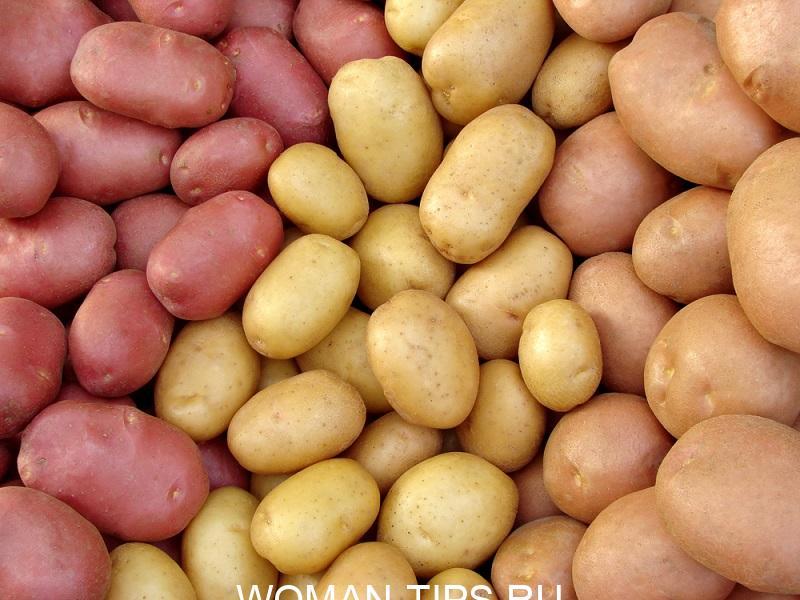 harvested-potato-tubers