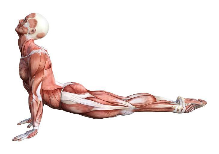 3d-rendering-male-anatomy-figure-on-white