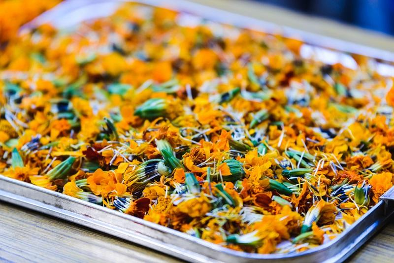 marigolds-in-a-tray